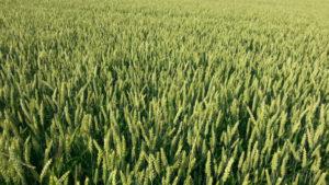 umowa dzierżawy gospodarstwa rolnego