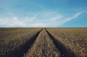 umowa dzierżawy gruntów rolnych